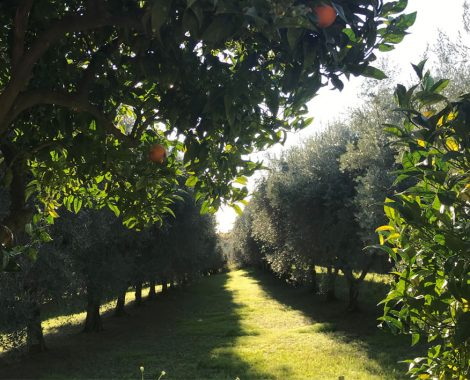 jardin olivier milpa event